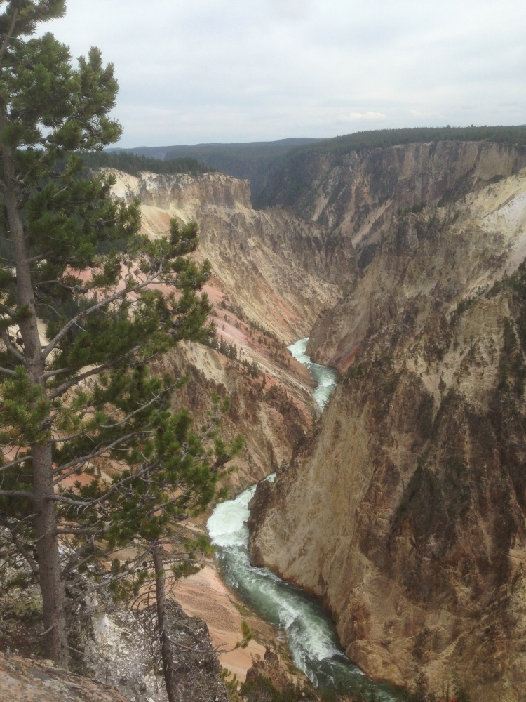 A river in Yellowstone National Park.