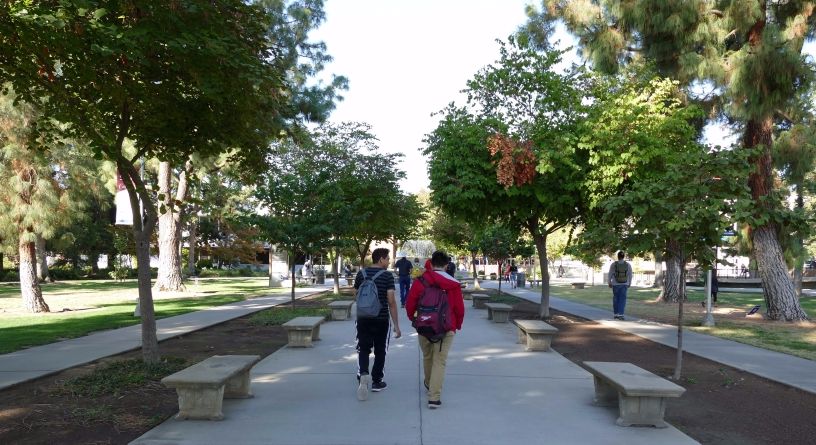 Students walk beneath the trees in the center of campus