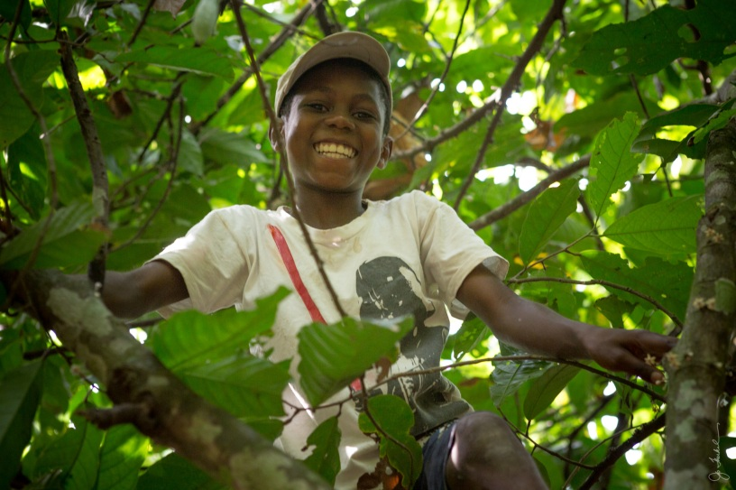 Young Ghana boy in a cocoa tree