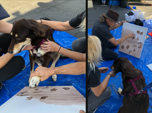 Sable and her human Steve Verrue work on a piece of art together.