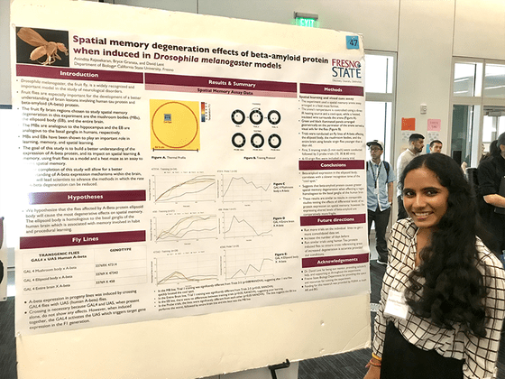 Anindita Rajasekaren - Spatial memory degeneration effects of beta-amyloid protein when induced in Drosophila melanogaster models.